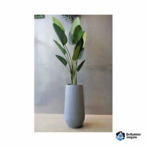 Gemummificeerde plant Dame