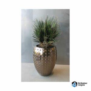 Gemummificeerde plant Halong Goud