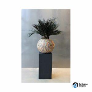 Gemummificeerde plant Bonaire