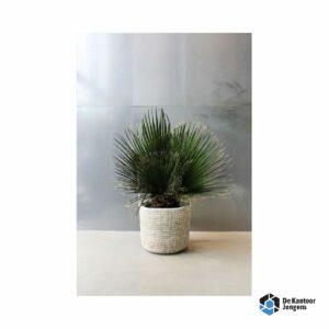 Gemummificeerde plant Nam Light